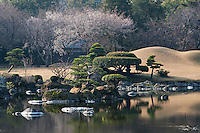 A view of prunis in blossom and pinus trees on the banks of the ornamental lake at the Suizen-ji garden, Kumamoto, Japan