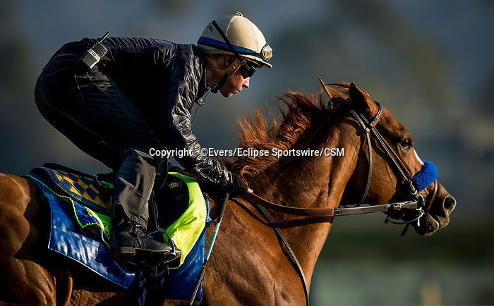 November 21, 2018: Chasing Yesterday with Drayden Van Dyke works out at Santa Anita on November 21, 2018 in Del Mar, California. Evers/Eclipse Sportswire/CSM