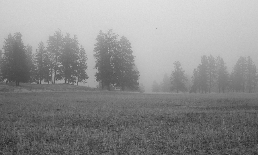 Thick fog rolls through the trees in an eerie scene.