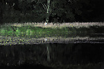 L'ETANG SUSPENDU<br /> <br /> Conception : Vincent Dupont. <br /> Danse : Aline Landreau, Vincent Dupont. <br /> Lumi&egrave;re : Yves Godin<br /> Son : Maxime Fabre<br /> Collaboration artistique : Myriam Lebreton. <br /> Production : J&rsquo;y pense souvent (&hellip;)<br /> Le 07/06/2014<br /> Lieu : Parc Jean-Jacques Rousseau<br /> Ville : Ermenonvile