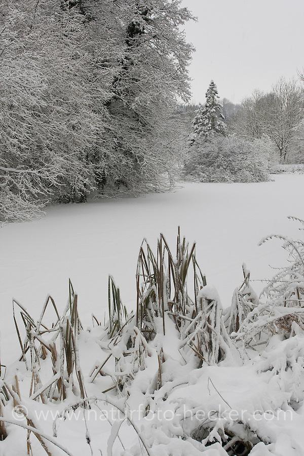 Teich, Tümpel, Weiher, See im Winter mit Schnee und Eis, pond, lake in winter with snow and ice