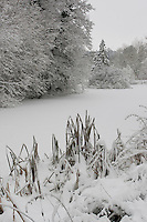Teich, Tümpel, Weiher, See im Winter mit Schnee und Eis, pond, lake in winter with snow and ice