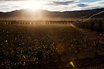 BAJA CALIFORNIA - NOVEMBER 26, 2013:  Baja California's Valle de Guadalupe wine region is a popular tourist destination. Residents and wineries in Mexico's wine country are protesting the mayor's relaxing of zoning regulations they say will lead to a drastic change in the culture of  the popular tourist destination.  CREDIT: Max Whittaker for The New York Times