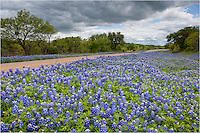 North of Mason, Texas, the state wildflower blooms with gusto in the Spring of 2010. This little road had corners and straightaways that were filled with seas of blue at nearly every bend that year. The landscape was pretty amazing.