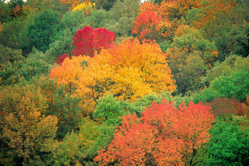 Vibrant colors of fall folliage in the Arbuckle mountains of southern Oklahoma.