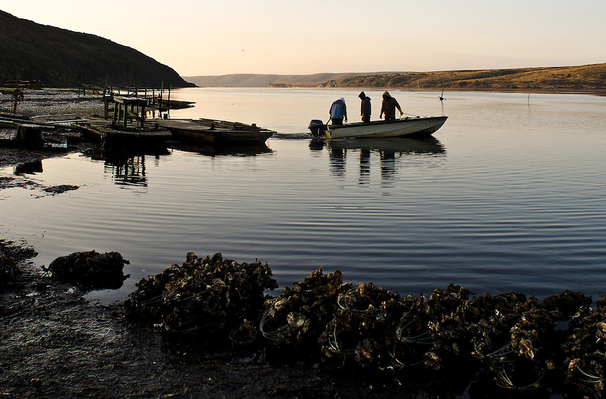 Workers launch their motorboat to inspect oysters growing in the waters of Drakes Estero at Drakes Bay Oyster Company in Inverness, Calif., on December 13, 2011. The federal contract under which the Drakes Bay Oyster Company operates has recently expired. Now the Department of the Interior must decide whether or not to allow the sustainable oyster farm to continue commercial operations in a federally designated marine wilderness. (Alvin Jornada / Special to The Chronicle)