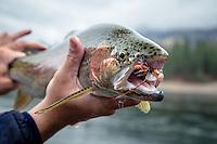 Columbia River - Upper