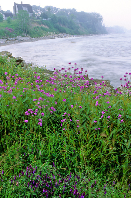 The Lake Michigan shore is covered with wildflowers near Algoma, Wisconsin