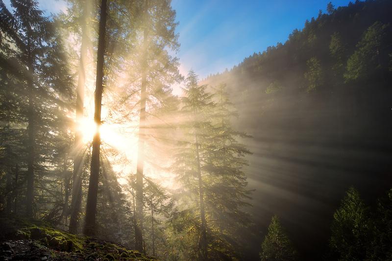 Sun rays through fog. Eagle Creek, Oregon