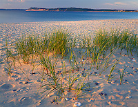 Sleeping Bear Dunes National Lakeshore, MI<br /> Evening light on dune grasses and white sand beach of Platte Bay with Empire Bluffs in the distance, Lake Michigan