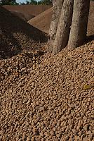 Extração de areia e seixo das águas do rio Tocantins.<br /> Marabá, Pará, Brasil<br /> ©FOTO: PAULO SANTOS/INTERFOTO<br /> 2010