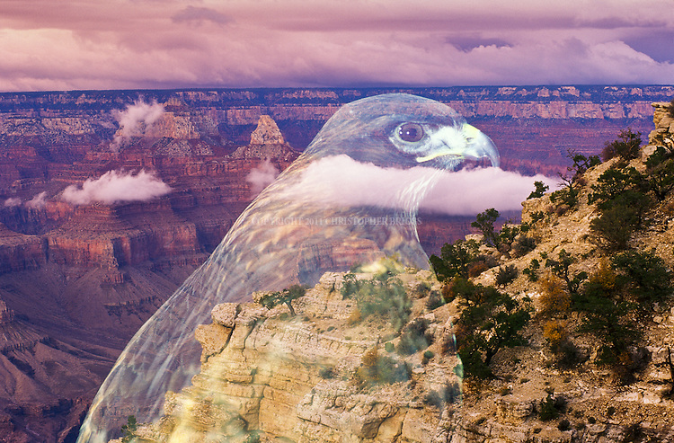 Double exposure of Red Tailed Hawk and the Grand Canyon, AZ.