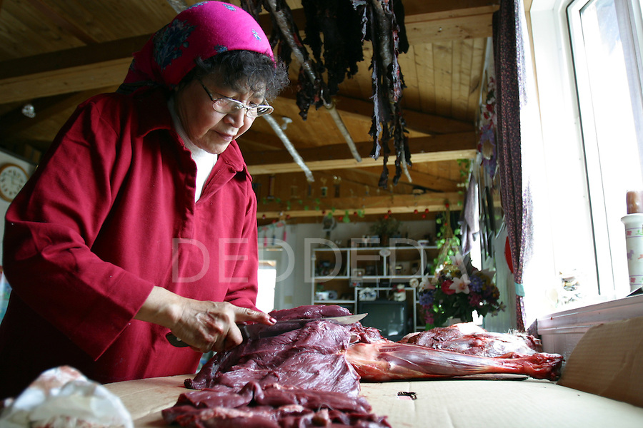 Vuntut Gwitchin First Nation woman, Helen Charlie, cuts caribou meat to make dry meat, like jerky, in her home in Old Crow, Yukon Territory, Canada..