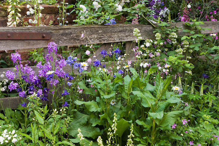 May june flower garden plant flower stock photography - Rustic flower gardens ...