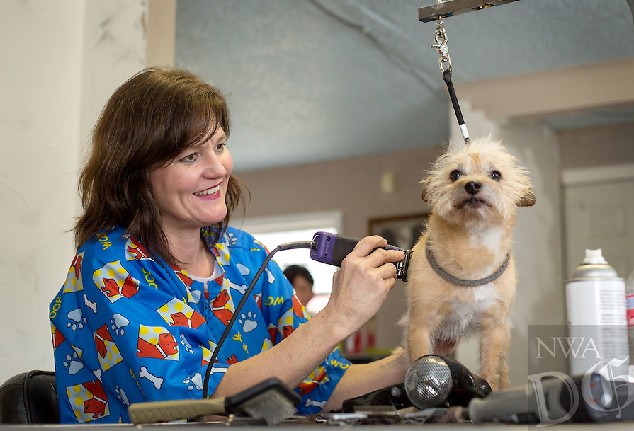 STAFF PHOTO JASON IVESTER --10/02/2014--<br /> Lisa Cabeldue (cq) trims the hair on Baxter, a terrier, on Thursday, Oct. 2, 2014, inside her shop, Bone Jour Pet Salon, in Bentonville.