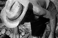 A Cuban charcoal and tobacco farmer works in the Valle de Vi˜ãles in Pinar del Rio, Cuba.