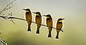 Africa: Birds