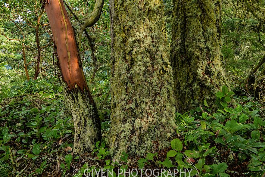 Pacific Northwest Coastal Forest, Washington