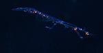 Mantis shrimp larval, Black Water Diving, Atlantic Ocean, S.E. Florida, Gulfstream Current glide.