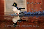 Carl, ANIMALS, wildlife, photos(SWLA3739,#A#)