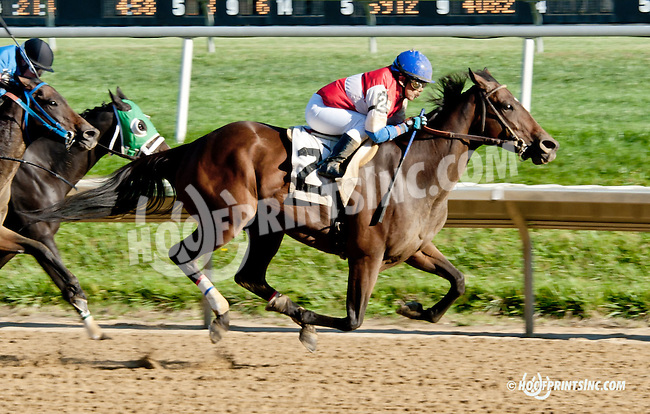 Delicat Notice winning at Delaware Park on 9/23/13