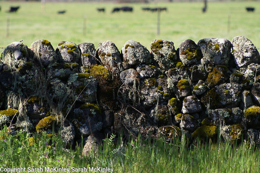 An old, lichen-covered stone fence near a pasture on Highway 128 between Geyserville and Calistoga in Napa County in Northern California.
