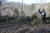 NWA Democrat-Gazette/FLIP PUTTHOFF <br /> Falysha Dibasilio (cq), a Rogers Heritage High School students, helps scatter cut cedars Feb. 18 2017 during glade restoration work.