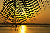 Brazil. Sunset; sky and water copper red at sundown; palm leaf in the foreground.