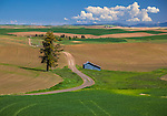 The Palouse, Whitman County, WA: Country road meanders through newly plnated spring fields