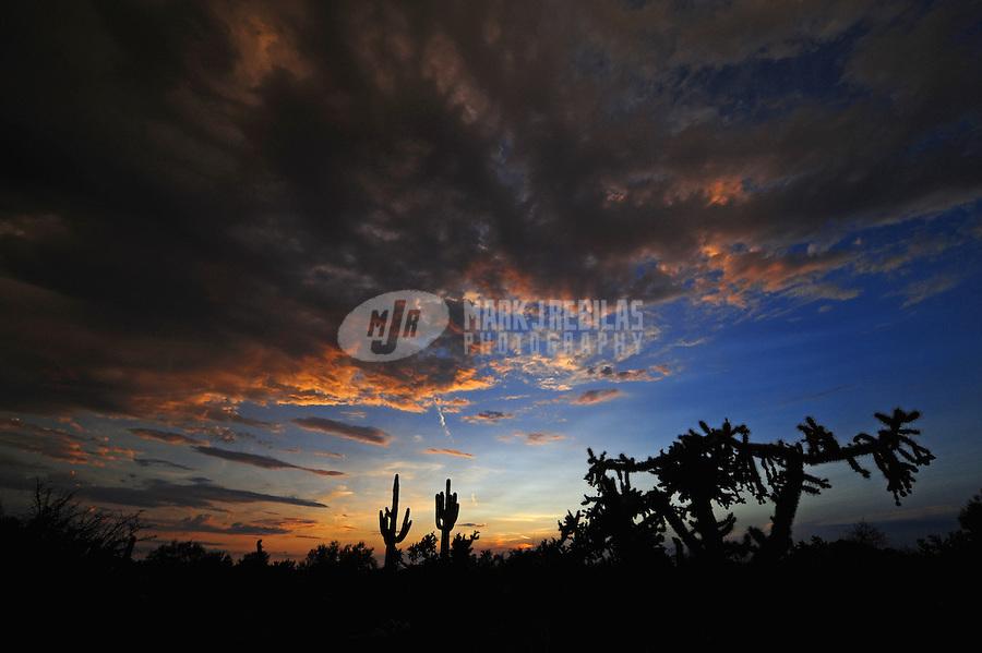 Desert cactus clouds sky Arizona sunset nature saguaro cholla silhouette sun dusk