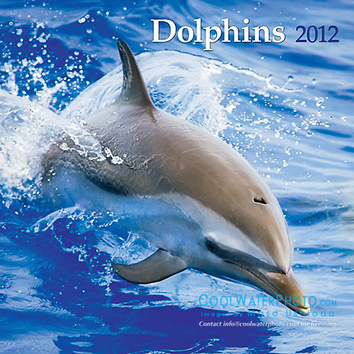 BrownTrout Dolphins 2012 Calendar, cover use, USA, Image ID: Spotted-Dolphin-Pantropical-0166