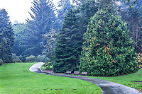 The Conifer Lawn in the rain; San Francisco Botanical Garden