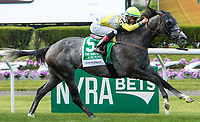 ELMONT, NY - JUNE 10: Ascend #5, ridden by Jose Ortiz, wins the Woodford Reserve Manhattan Stakes on Belmont Stakes Day at Belmont Park on June 10, 2017 in Elmont, New York (Photo by Sue Kawczynski/Eclipse Sportswire/Getty Images)