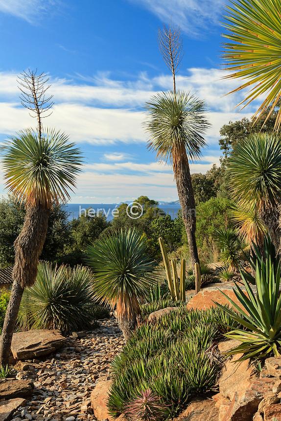 Domaine du Rayol en novembre : le jardin d'Amérique aride, dominé ici par les Yucca rostrata avec aussi agaves et cactées.
