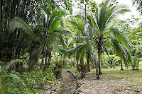 A path to nearby beach, Playa Pan Dulce, at  Osa Clandestina (aka Hacienda Clandesina), Peninsula de Osa, Puntarenas, Costa Rica. CREDIT: Lisa Corson for The Wall Street Journal     SLUG: OFFGRID-Costa Rica Images are available for editorial licensing, either directly or through Gallery Stock. Some images are available for commercial licensing. Please contact lisa@lisacorsonphotography.com for more information.