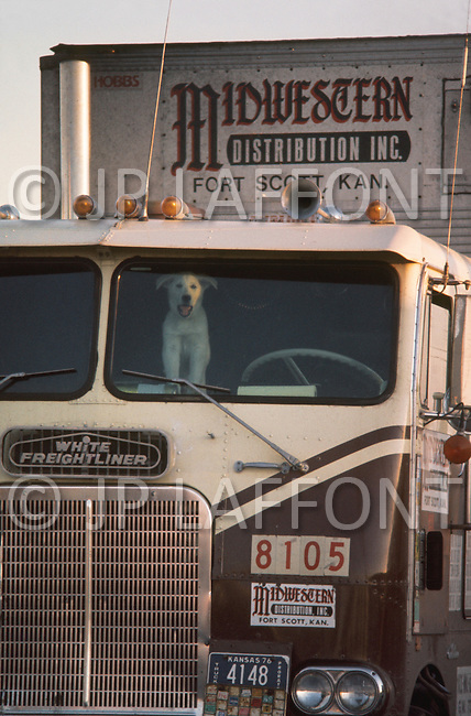 Texas, 1978. At the Truck Stop. Typical drivers companion is waiting for his master. The CB antenna are visible on all the trucks.