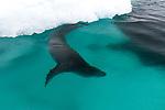 Skog Bay, Antarctica
