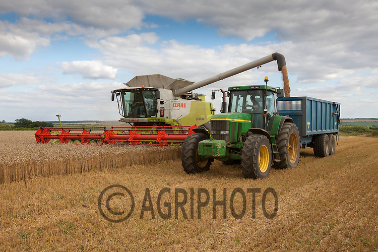 Harvesting Winter Wheat in Rutland<br /> Picture Tim Scrivener 07850 303986