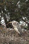 Wunderman's Heron