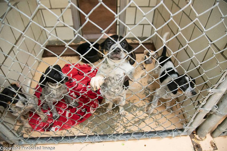 Shelter Medicine and Population class at Starkville animal shelter.