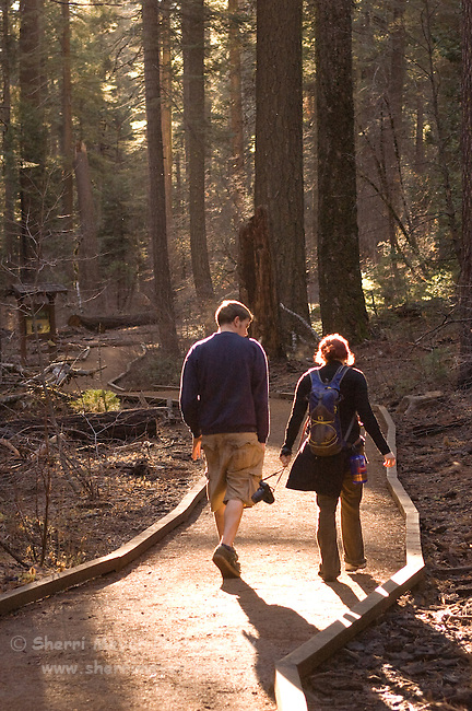 Visitor's enjoying Calaveras Big Trees State Park, California