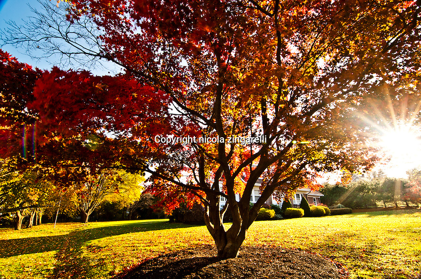 A brightly colored tree hides a mansion in the town of Plymouth, while the sun is sneaking into the frame