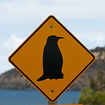 Panneau attention Pinguins  à Penneshaw Ile de Kangourou (Australie du Sud)