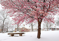 Snow covered lee park in Charlottesville, Va.
