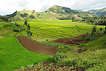 A Rwandan Tea Plantation