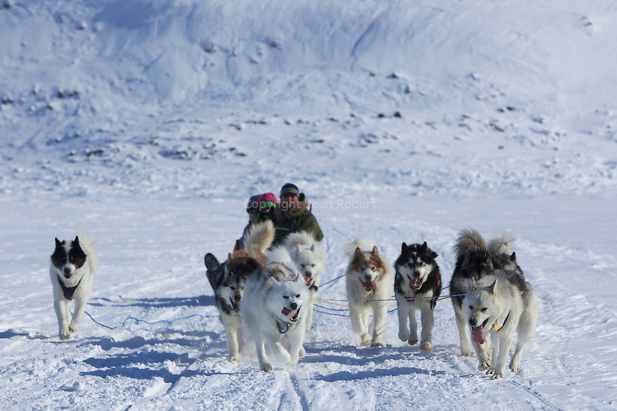 traineau a chiens dans la baie de Frobisher