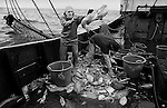 PZ 198, the 'Aaltje Adriaantje'.<br /> Sorting the catch.<br /> <br /> Due to the Gulf Stream supplying warmer water around the Cornish coastline, Newlyn fishermen can catch more than 30 different species of fish. <br /> <br /> Newlyn harbour lands around &pound;19 million worth of fish each year, making it one of the country's largest fishing ports in terms of fish sold and a major centre for distribution of high value fish and shellfish to the Continent.