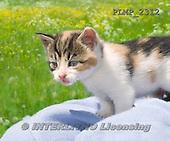 Marek, ANIMALS, REALISTISCHE TIERE, ANIMALES REALISTICOS, cats, photos+++++,PLMP2312,#a#