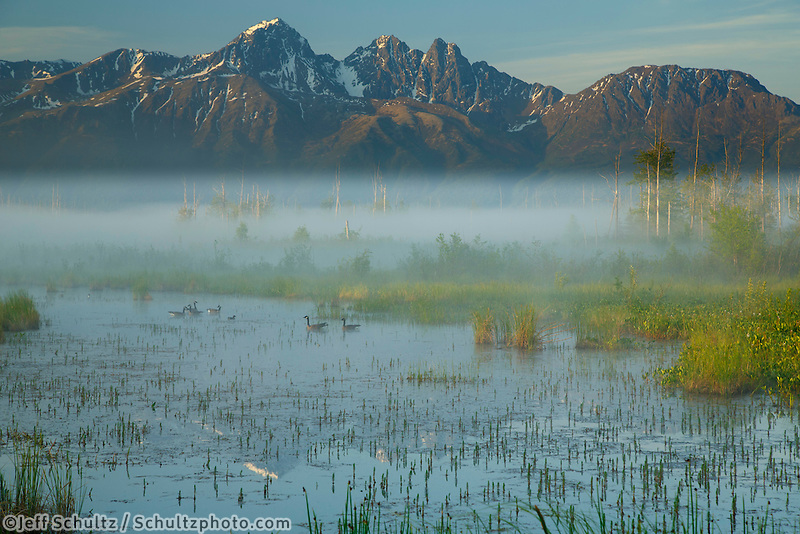 Summer Landscape of Palmer Hayflats Refuge with Canadian Geese and Twin Peaks of Chugach Mountain Range  May  2015  <br /> <br /> (C) Jeff Schultz/SchultzPhoto.com