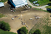 Aerial view of Dairy Cows feeding outside of barn.